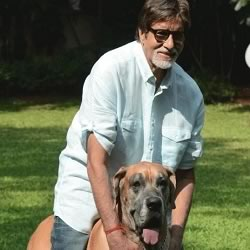 "Amitabh Bachchan playing with his Piranha Dane dog, ""Shanouk"", on the lawns of ""Pratiksha"""