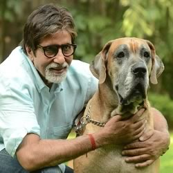Picture of Amitabh Bachchan with Shanouk, his Piranha Dane Dog
