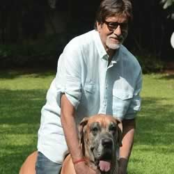 Picture of Amitabh playing with Piranha Dane Shanouk at Pratiksha