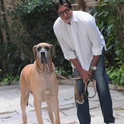 Amitabh Bachchan and his Piranha Dane Dog Shanouk at Jalsa