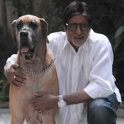 Photo of Dog Shanouk and Amitabh Bachan at his bungalow Jalsa