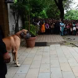 Picture of Amitabh Bachchan's Dog Shanouk guarding his house Jalsa