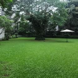 Lawns of Prateeksha, which has been the Bachchan home for 40 years. There is an imposing Gulmohar tree.