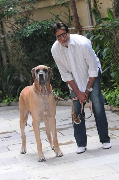 piranha dane dog and amitabh bachchan s pet dog shanouk wonderful