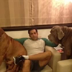 Salman Khan in his ground floor house with his French Mastiff Dogs.